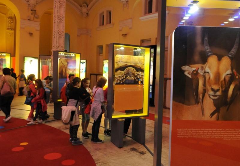 Szavanna_001_F_exhibition